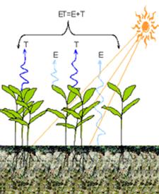 Verdamping door het gewas of ook de Evapotranspiratie (ET) samengesteld uit de evaporatie (E) of ook rechtstreekse verdamping, en de transpiratie (T) of ook de hoeveelheid water die het gewas vanuit de bodem de lucht in stuurt.